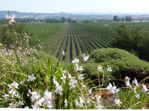 NAPA20VALLEY20WINE20COUNTRY